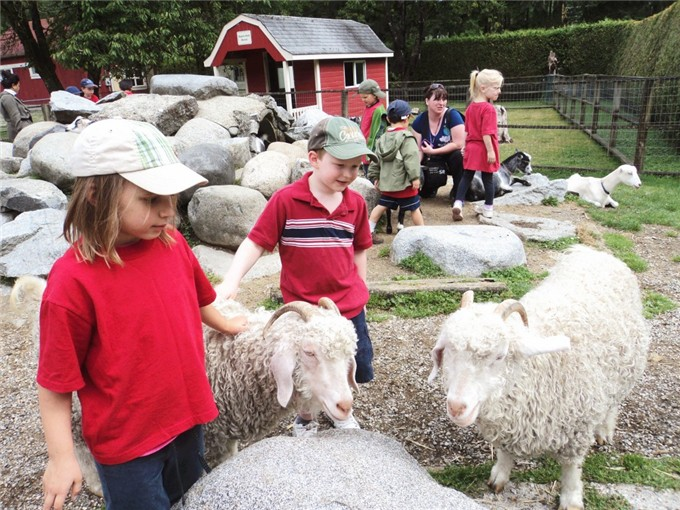 Several children petting sheep