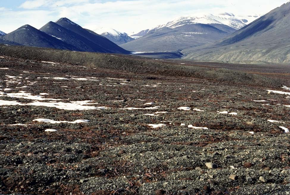 arctic and alpine soils essay Tundra is the global biome that consists of the treeless regions in the north (arctic  tundra) and high mountains (alpine tundra) the vegetation of tundra is low.