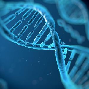 Bioarchaeology, DNA, and Indigeneity
