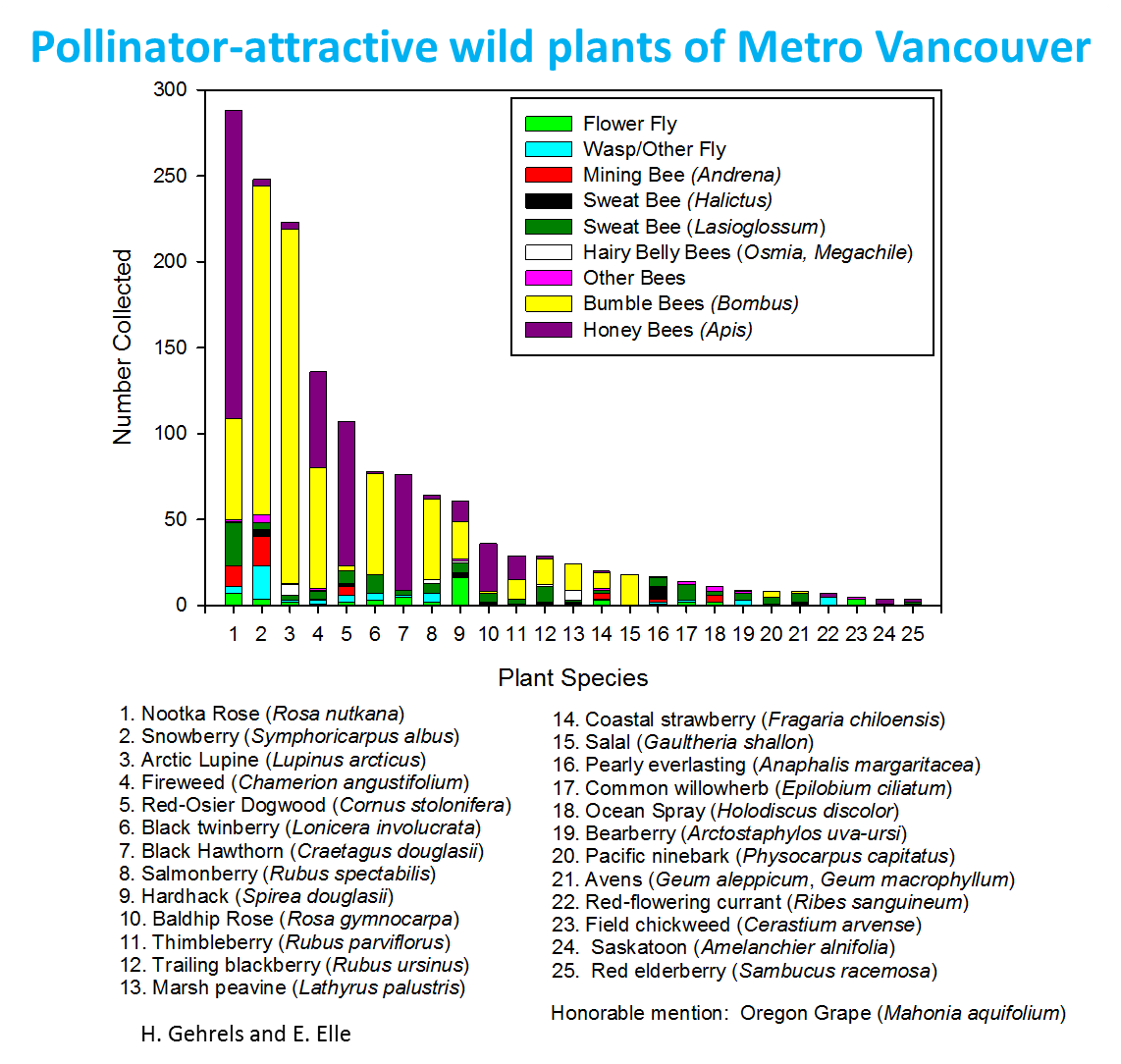 bee info for the public the pollination ecology lab at sfu