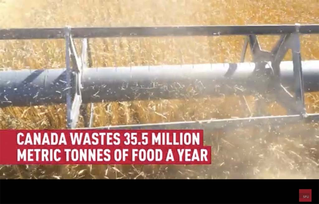 'Right to food' strategy could eliminate food waste on farms