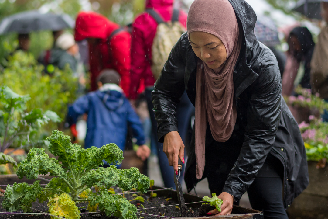 SFU urban planning researcher tackles food security